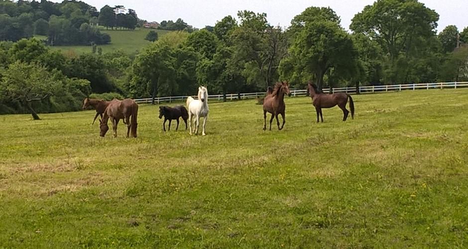 barns chevaux pas cher